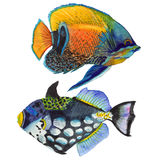 Watercolor aquatic underwater colorful tropical fish set. Red sea and exotic fishes inside. Aquarelle elements for background, texture, wrapper pattern Royalty Free Stock Photos