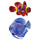 Watercolor aquatic underwater colorful tropical fish set. Red sea and exotic fishes inside. Aquarelle elements for background, texture, wrapper pattern Stock Photography