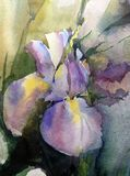 Watercolor art background abstract floral fantasy wet wash blurred spring iris single Stock Images