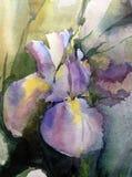 Watercolor art background abstract floral fantasy wet wash blurred spring iris single. Art abstract background executed watercolor. textured strokes blots splash stock illustration