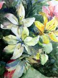 Watercolor art background abstract pattern floral bouquet flowers lilies garden wedding  textured wet wash blurred fantasy. Art abstract background extruded in Stock Photos