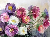 Watercolor art background colorful aster flower bouquet still life painting Royalty Free Stock Photos