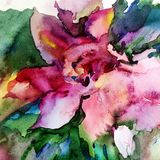 Watercolor art background colorful exotic violet flower single creative. Watercolor art  background abstract  colorful textured violet green yellow spring wet Stock Photos
