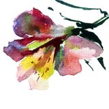 Watercolor art background colorful flower Royalty Free Stock Photo