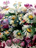 Watercolor art  background  colorful flower chamomile wild Royalty Free Stock Photography
