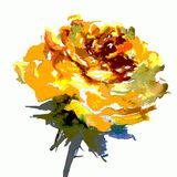Watercolor art  background  colorful flower  rose Royalty Free Stock Photos