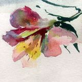 Watercolor art background colorful flower rose red Royalty Free Stock Photo