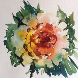 Watercolor art background colorful flower rose single garden Royalty Free Stock Photography