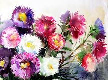 Watercolor art background colorful soft violet purple pink aster flower bouquet still life painting vector illustration