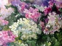 Watercolor art background colorful summer fresh flower  violet white lilac phlox. Art abstract background executed with watercolors . delicate lilac violet white Stock Photo