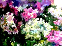 Watercolor art background colorful summer fresh flower violet white phlox. Art abstract background executed with watercolors . delicate lilac violet white phlox Royalty Free Stock Images