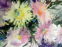 Watercolor art background delicate colorful nature flowers asters bouquet fresh romantic Stock Photography