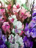 Watercolor art background flowers delicate iris violet pink. Art abstract background executed with watercolors .   delicate iris violet pink bright wet wash Stock Photography