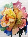 Watercolor art background nature  fresh colorful tea rose flower single delicate romantic. Watercolor art  background abstract  colorful textured violet green Stock Photo