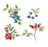 Watercolor art berry set stock illustration