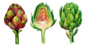 Watercolor artichoke Stock Photography