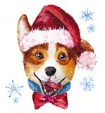 Watercolor artistic Christmas dog in hat portrait isolated on white background. Royalty Free Stock Images