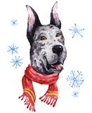 Watercolor artistic mastiff dog in winter scarf portrait isolated on white background. Stock Photos
