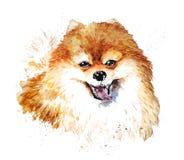 Free Watercolor Artistic Orange Dog Portrait Isolated On White Background. Stock Photo - 99230490