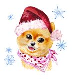 Watercolor artistic xmas dog in santa hat portrait isolated on white background. Royalty Free Stock Photos