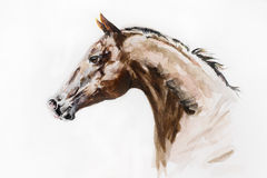 Watercolor artwork. Of purebred stallion Stock Photography