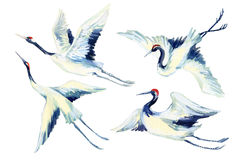 Watercolor asian crane bird set Stock Photo