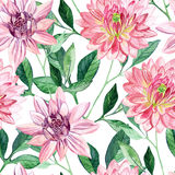 Watercolor aster seamless pattern Royalty Free Stock Photos