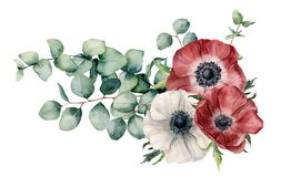 Watercolor asymmetric bouquet with anemone and eucalyptus. Hand painted red and white flowers, eucalyptus leaves and royalty free illustration