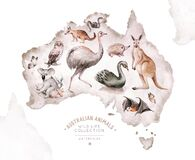 Watercolor australian cartoon kangaroo, ostrich Emu , koala and flying fox, owl, Echidna . Australian Black Swan and
