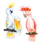 Watercolor Australian Cockatoo Royalty Free Stock Images