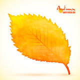Watercolor autumn alder leaf Royalty Free Stock Images
