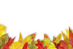 Watercolor autumn background Royalty Free Stock Image
