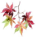 Watercolor autumn branch with colorful leaves Stock Images