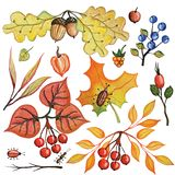 Watercolor autumn branches,berries,insects,Leaves set Stock Photos