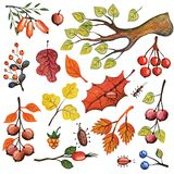Watercolor autumn branches,insects,berries,Leaves set Stock Images