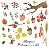 Watercolor autumn branches with leaves,Apple,pear Royalty Free Stock Image