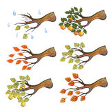 Watercolor autumn branches with leaves,Apple,pear Stock Images