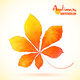 Watercolor autumn chestnut leaf Stock Photography