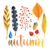 Watercolor autumn decoration with leaves, berries and feathers. Watercolor collection for holiday decorations Royalty Free Stock Photos