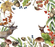 Watercolor autumn forest frame. Hand painted floral frame with deers, rowan, mushrooms, berries,acorn, pine cone, fall Royalty Free Stock Photography