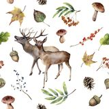 Watercolor autumn forest pattern. Hand painted floral frame with deers, rowan, mushrooms, berries,acorn, pine cone, fall. Leaves isolated on white background Royalty Free Stock Images
