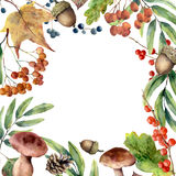 Watercolor autumn frame. Hand painted floral frame with rowan, mushrooms, berries,acorn, pine cone, fall leaves isolated Stock Photos