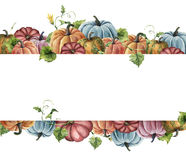 Watercolor autumn harvest card. Hand painted border with bright pumpkins with leaves and flowers isolated on white Royalty Free Stock Photography