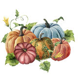 Watercolor autumn harvest. Hand painted bright pumpkins with leaves and flowers isolated on white background. Botanical. Illustration for design royalty free illustration