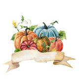 Watercolor autumn label. Hand painted ribbon with bright pumpkins with leaves and flowers isolated on white background. Botanical illustration for design Royalty Free Stock Image