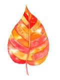Watercolor autumn leaf Stock Photo