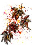 Watercolor autumn leaf set of tropical leaves and splashes vector illustration