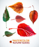 Watercolor autumn leaf set. Vector illustration Stock Photos