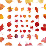 Watercolor autumn leaf set. On white background Royalty Free Stock Image