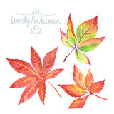 Watercolor autumn leaves. Royalty Free Stock Image